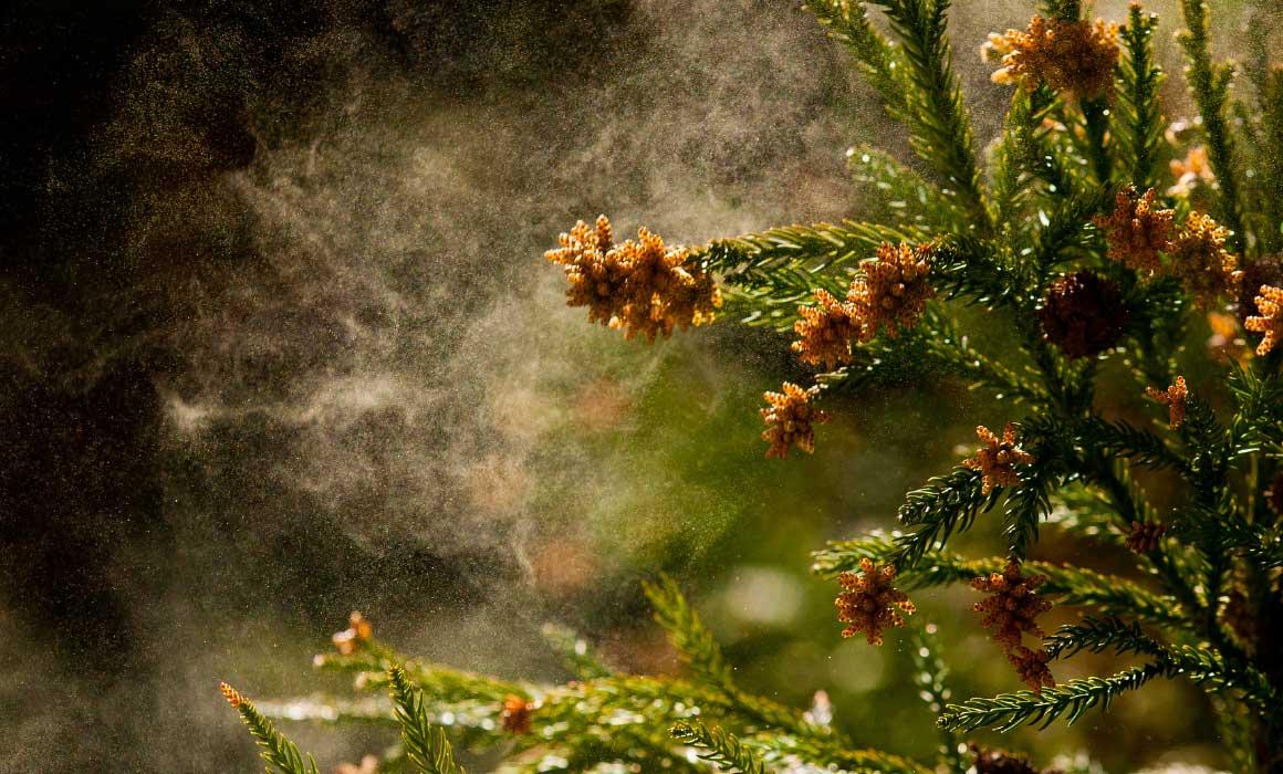 花粉 換気